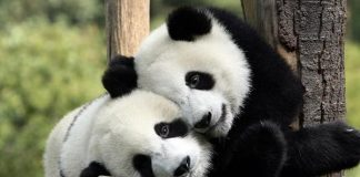 Top 8 Places to Visit in China for Animal Lovers