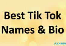 Best 200 Tik Tok Names & Bio To Brand Yourself Effectively